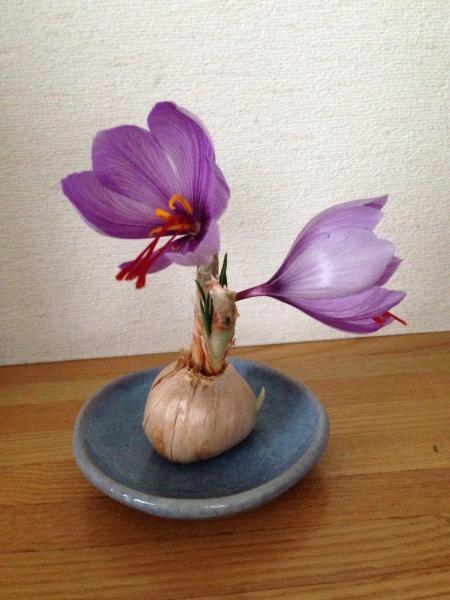 saien-navi-matome_1 4_saffron