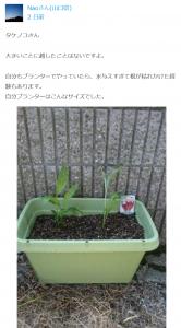 プランター栽培3(Nao様)