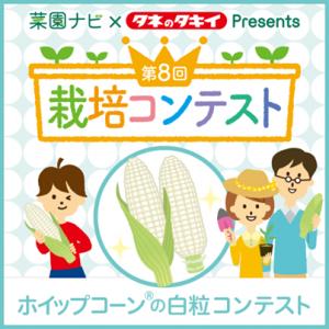 ホイップコーン栽培コンテスト